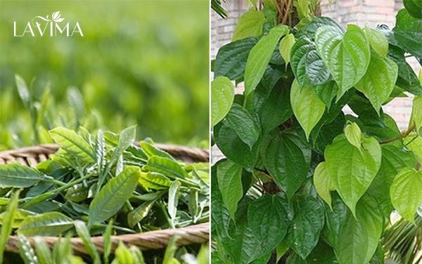 Cách chữa viêm phụ khoa bằng lá trầu không và lá trà xanh
