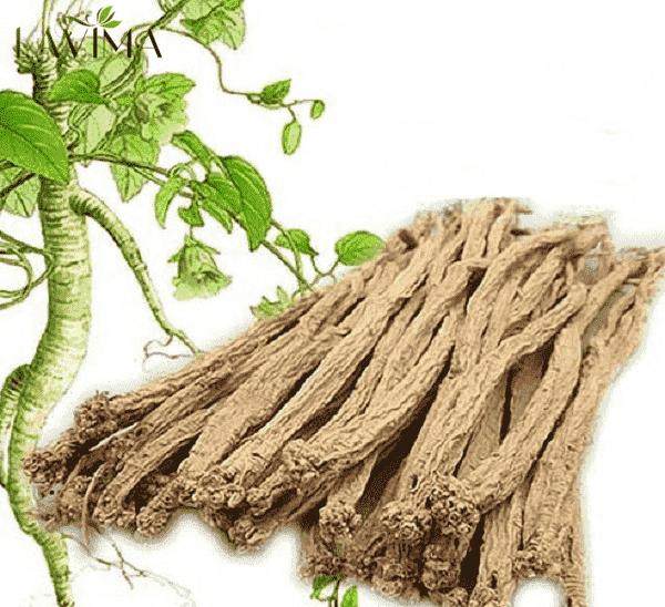 Đẳng sâm - điển hình cây thuốc nam chữa viêm phụ khoa