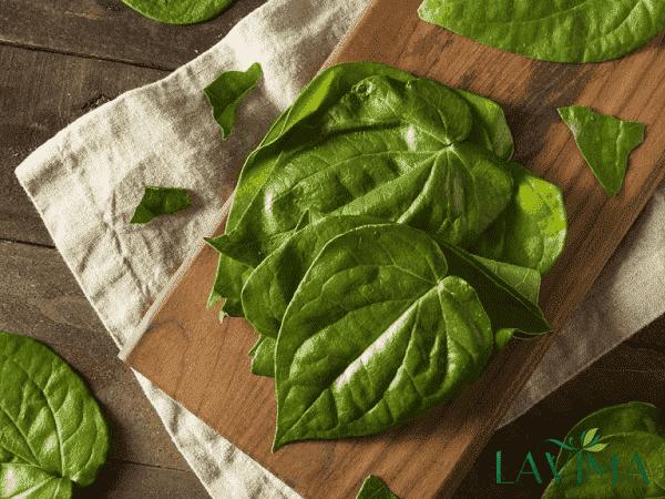 Chữa ngứa vùng kín hiệu quả bằng lá trầu không