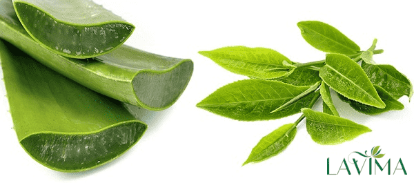 Trị ngứa vùng kín bằng trà xanh và nha đam