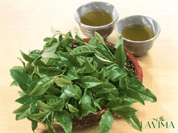 Trị ngứa vùng kín bằng cách xông với nước lá trà xanh